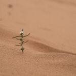 Herzreisen - Mit Berbern leben_1